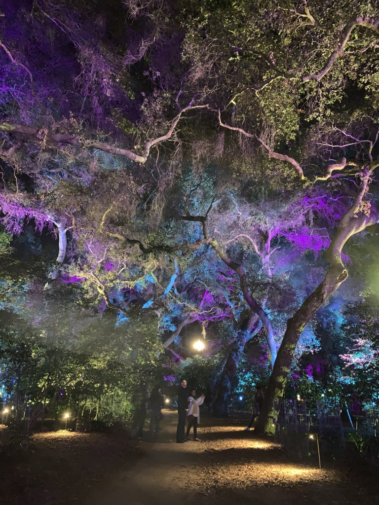 Colorful Trees at Enchanted Forest of Light in Descanso Garden